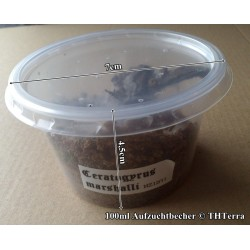 125ml rearing cup 50 pack